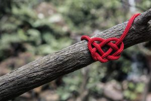Rope knot on tree - Are Your Feelings Friends or Foes?